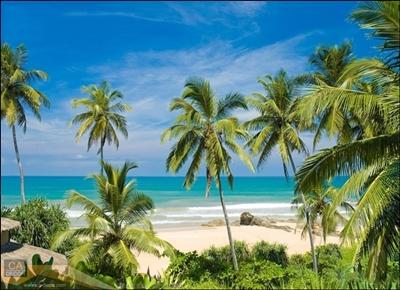 ชายหาดและต้นมะพร้าว
