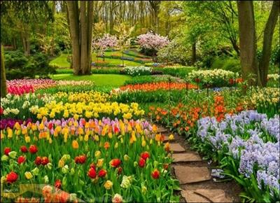 ทางเดินสวนดอกไม้