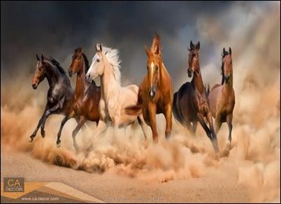 ฝูงม้าวิ่ง