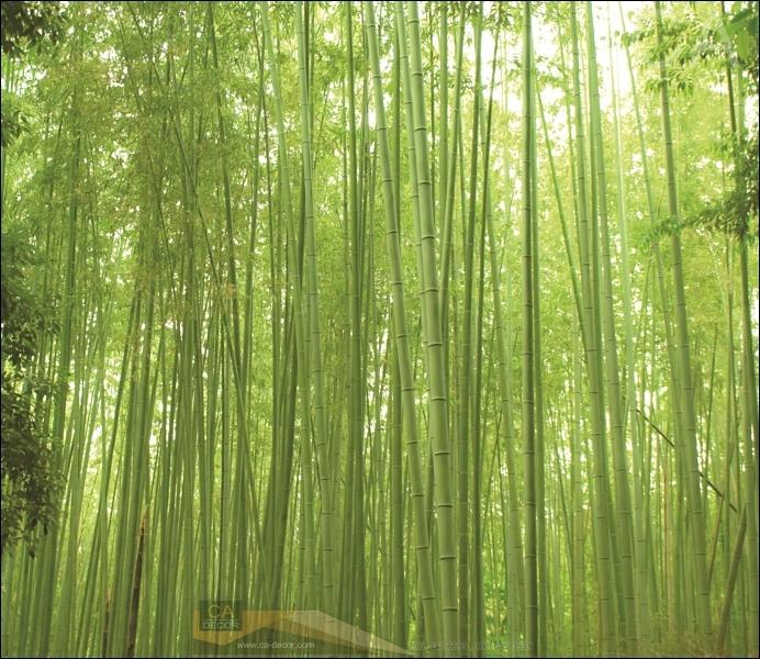 ภาพวิวสำเร็จรูป ภาพป่าไผ่ตรง