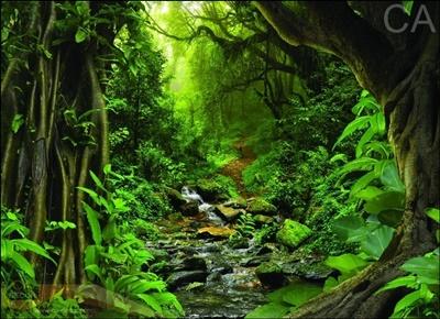 ภาพ ป่าไม้ ลำธาร