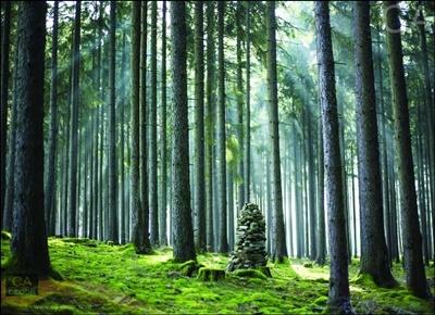 ต้นไม้ในป่าใหญ่