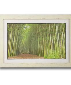 กรอบรูป ภาพป่าไผ่